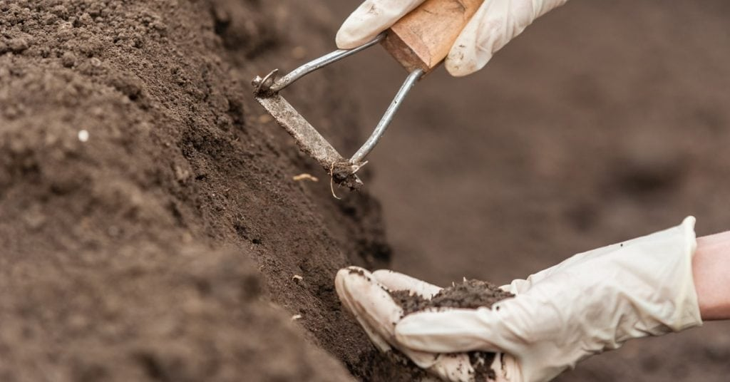 How to test your soil