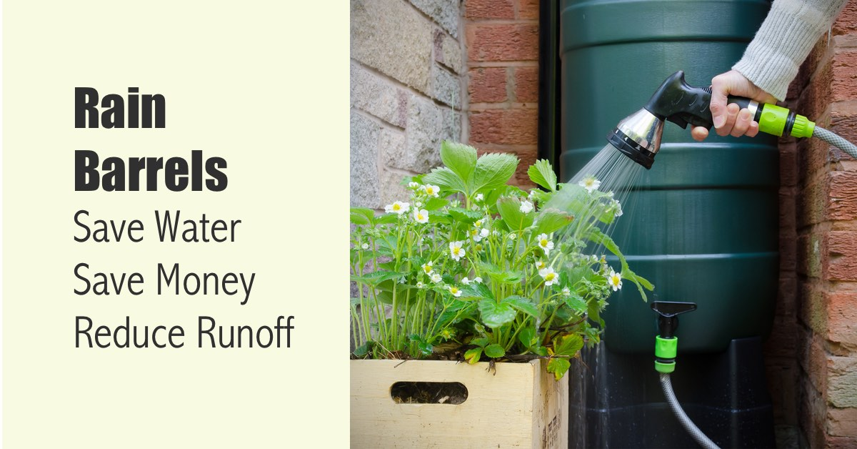 Rain Barrels Save Water, Save Money and Reduce Runoff
