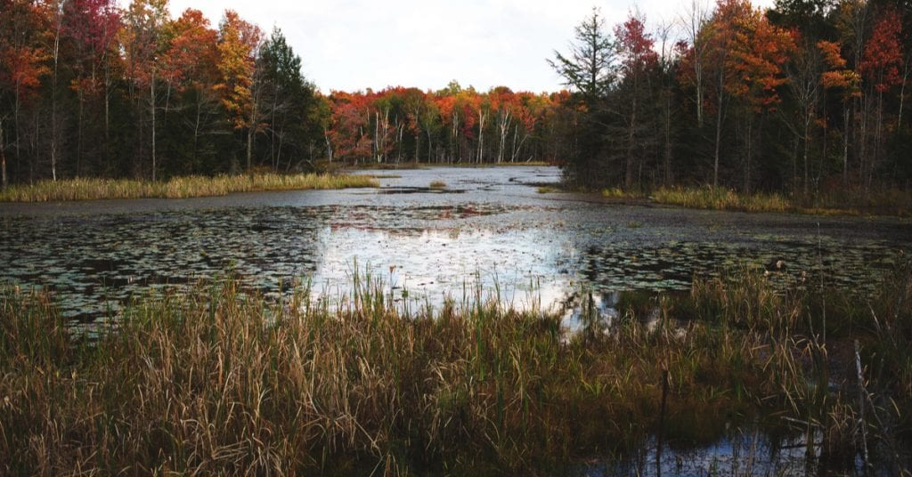 Complete Guide To Wetlands Site Remediation and Regulations, NJ